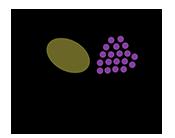 ABQ Olive Oil Company
